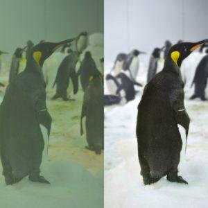 penguin_retouch